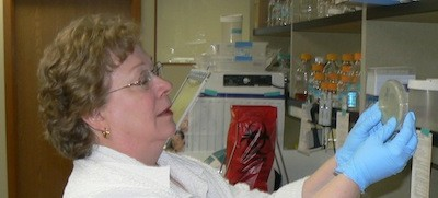 Ann Gauger working away in her lab
