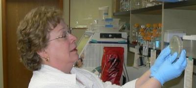 Ann Gauger working away in her lab