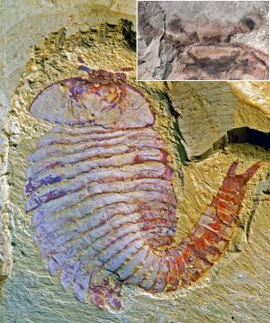New fossil discovery shows advanced brain structures