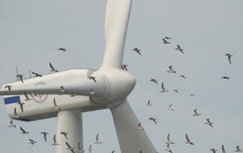 Green energy harms wildlife, especially birds
