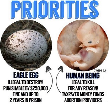 Eagle eggs are protected, unborn babies are not