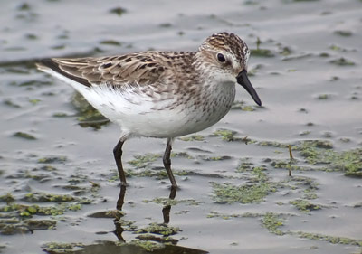 The shorebird's beak is more interesting than you might think